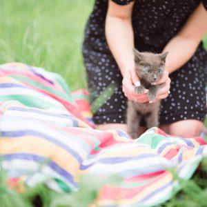 Kitty-On-Blanket